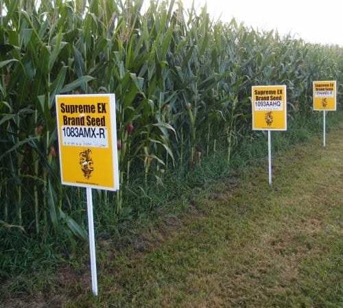 Genetically Modified Hybrid Corn Crop